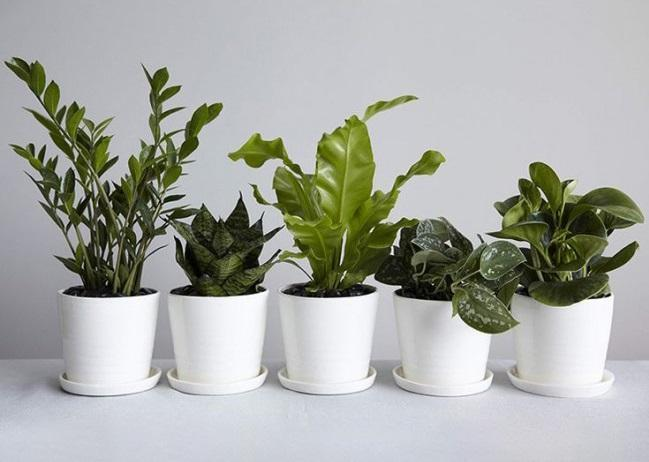 سلامت شش ها با گیاهان خانگی
