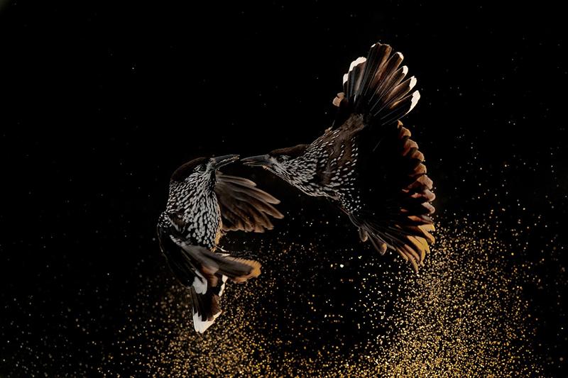 برندگان مسابقه عکاسی پرواز پرندگان سال 2020